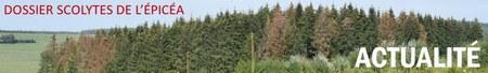 RECOMMANDATIONS AUX PROPRIÉTAIRES FORESTIERS PRIVES CONCERNÉS PAR DES ÉPICÉAS SCOLYTÉS SUR LEURS PARCELLES