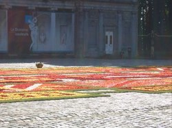 fleurs12
