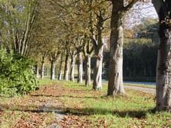 Chemin à travers bois